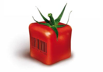 quadrat-tomate